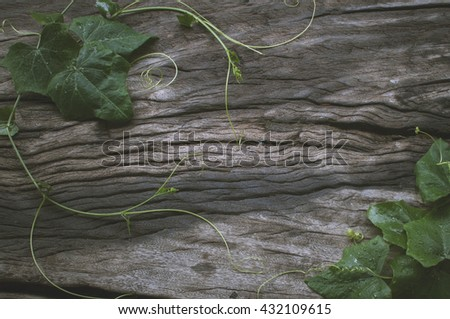 Vegetable gourd placed on the old wooden floor. - stock photo
