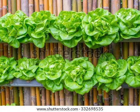 Hydroponics Vegetable Stock Photos Images Pictures