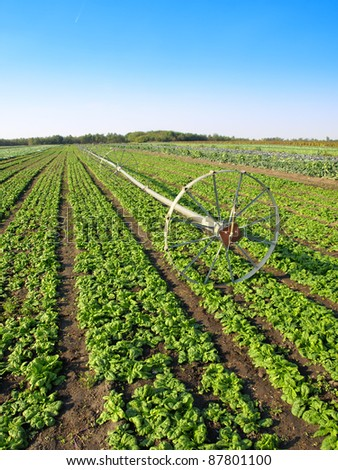 vegetable irrigation