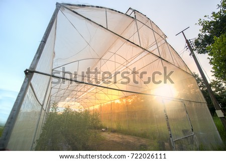 Vegetable nets for protection against pests. The mosquito net to grow vegetables without using chemical pesticides in the sunset.