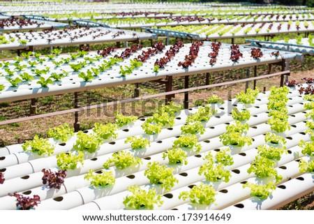 vegetable organic - stock photo