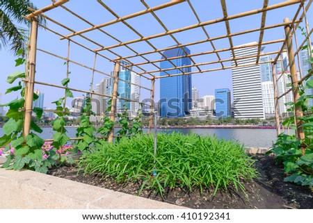 Vegetable plantation in urban garden. - stock photo