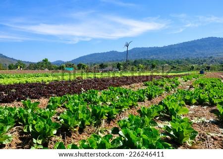 Vegetable plot - stock photo