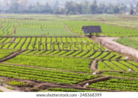 vegetable plot blur - stock photo