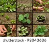 vegetable seedlings collection - stock photo