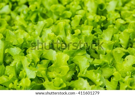 Vegetable seedlings, Thailand - stock photo