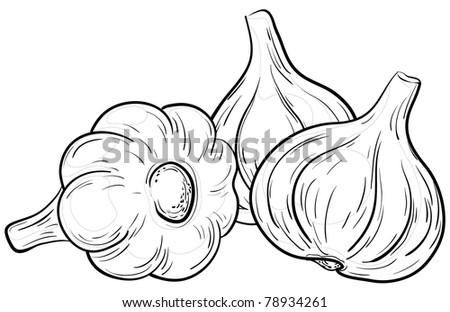 Vegetable, spice, three garlics, monochrome contour on white - stock photo