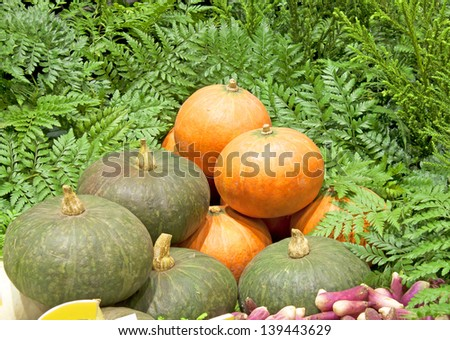 Vegetable vegetarian yellow pumpkin in the garden - stock photo