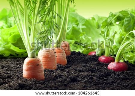 Vegetables growing in the garden - stock photo