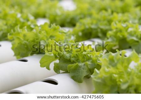 Vegetables hydroponic farm - stock photo