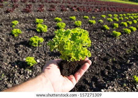 vegetables in a hand - stock photo