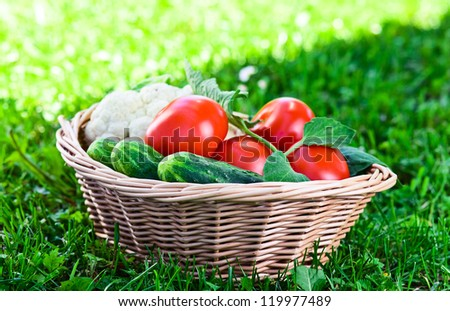 vegetables in basket on a green grass