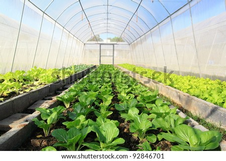 Vegetables in Covered Netting - stock photo