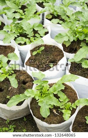 vegetables nursery - stock photo