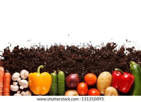 vegetables on the soil - stock photo