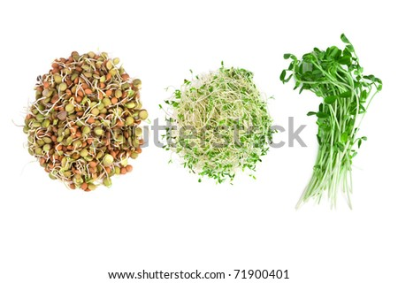 vegetarian food of alfalfa,snow peas and lentils isolated on white - stock photo