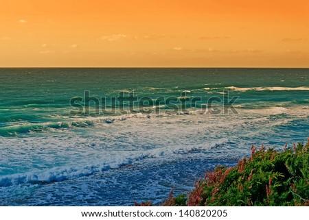 vegetation by the shore in Castelsardo at dusk - stock photo