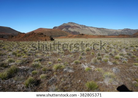 Vegetation in Haleakala Volcano, Maui, Hawaii - stock photo
