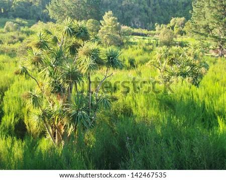 Vegetation in New Zealand - stock photo