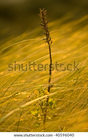 vegetation in the wind