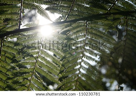 Vegetation Leaf at Mt Kilimanjaro, Africa - stock photo