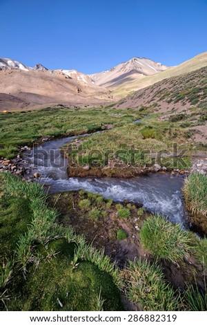 Vegetation of moist soil and high altitude (Mallin) on Domuyo Provincial Park, Neuquen, Argentina - stock photo
