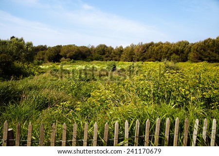 Vegetation of Ste-Marguerite island. - stock photo