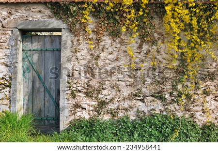vegetation on a stone wall of a garden with tatty wooden door  - stock photo
