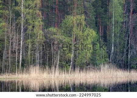Vegetation on the shore - stock photo