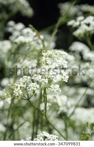 Vegetation spring in Gudar mountains Teruel Spain  - stock photo