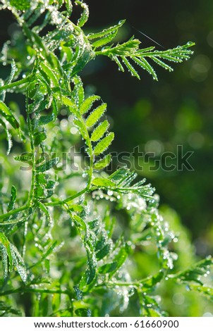 Vegetation with dew - stock photo