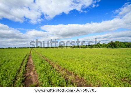 Vehicle path through a vast grass field with fluffy clouds in the Midwest  - stock photo