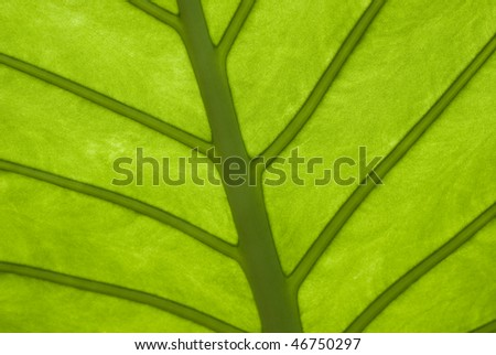 Veined leaf - stock photo