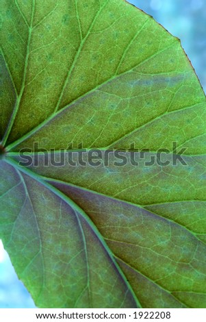 Veins in a plant leaf.