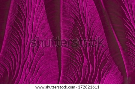 Veins of a leaf - stock photo