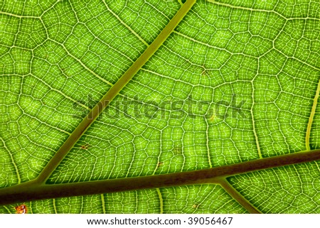 veins of a leaf colorfull pattern green background