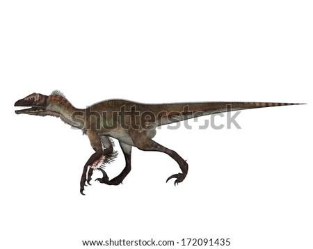 Velociraptor - stock photo