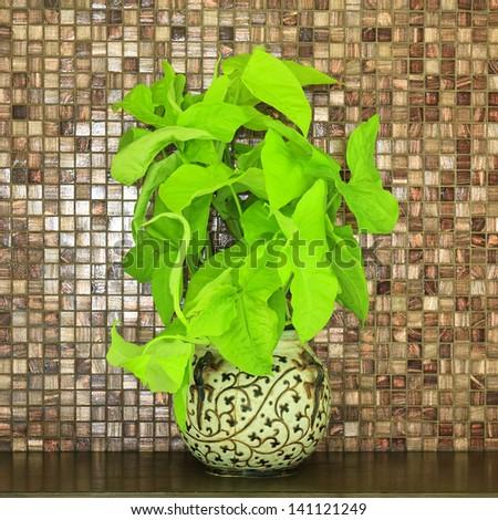 verdant plant in flowerpot on wood bar - stock photo