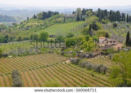 Vernaccia vineyards around the town of San Gimignano, Tuscany,italy