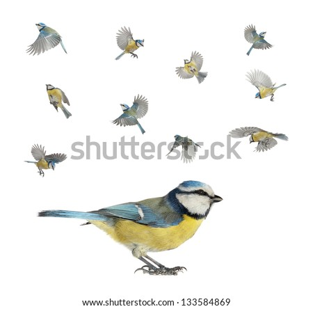 version of flight of a titmouse - stock photo