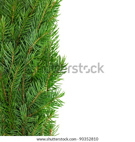 Vertical border of spruce branches on white. - stock photo