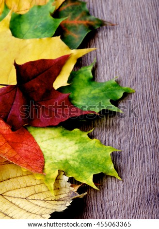 Vertical Border of Yellow, Red and Green Maple Leafs closeup on Textured Wooden background. Focus on Foreground