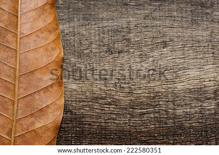 vertical brown dried leaves with an old wood background - stock photo