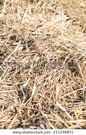 Vertical closeup of dry straw haystack with selective focus - stock photo