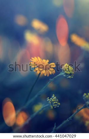 vertical colored wild flowers vertical nature landscape, macro details and shallow focus, colorful bokeh background, soft sunset colors  - stock photo