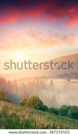 Vertical composition landscape of the summer sunrise. Colorful scene in Carpathian mountains at foggy morning. - stock photo