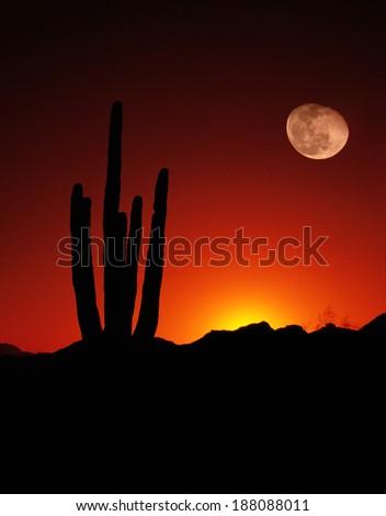 Vertical Desert Saguaro Cactus Full Moon Sunset American Southwest - stock photo