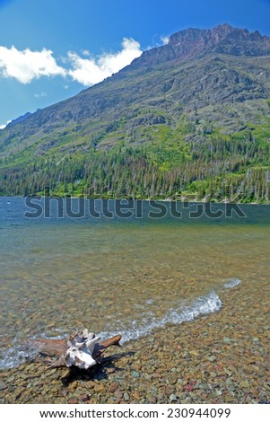 Vertical driftwood in a clear blue lake. - stock photo