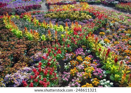 Vertical garden decoration. - stock photo
