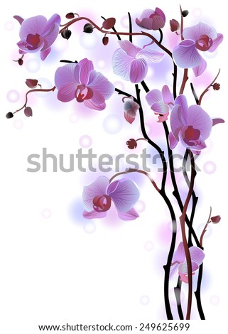 Vertical greeting card with violet gentle orchid brunches on the white background - stock photo